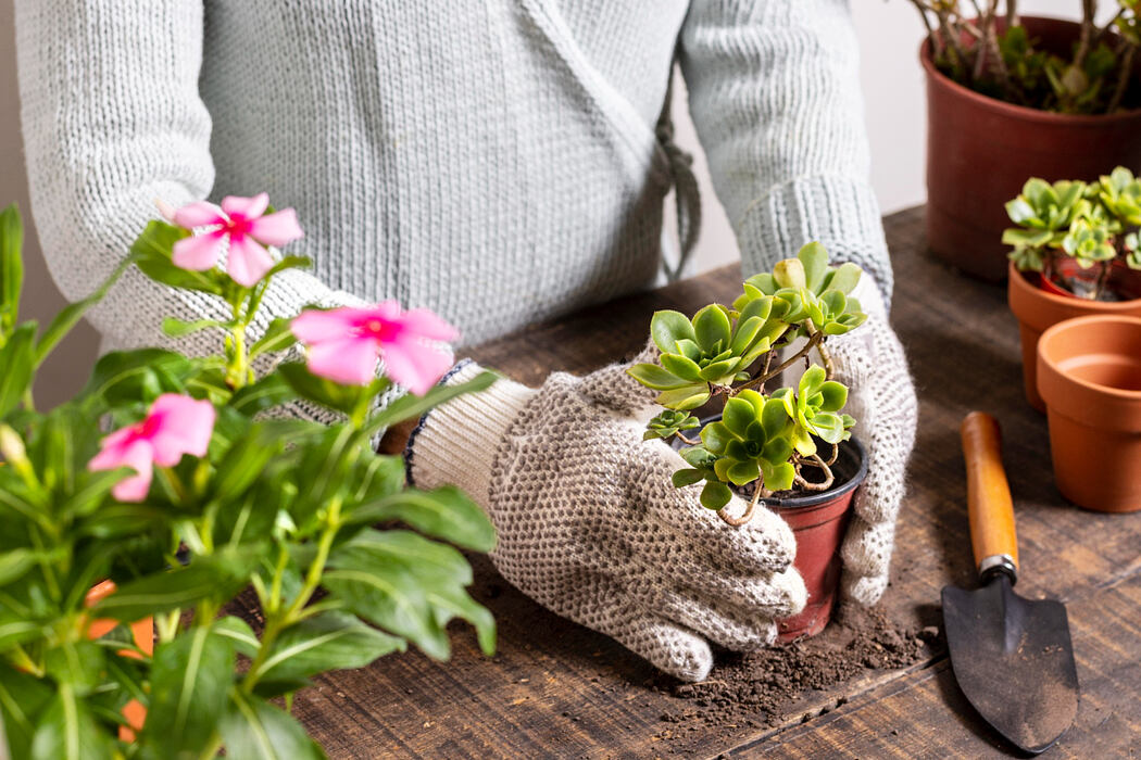 Home Gardening Tips: 5 Flowers You Should Plant this Summer